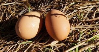 Eggs Pastured Sydney Canberra